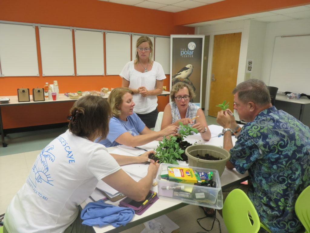 Learning hands-on plant phenology and plant parts